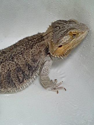 Mandatory Shower Image